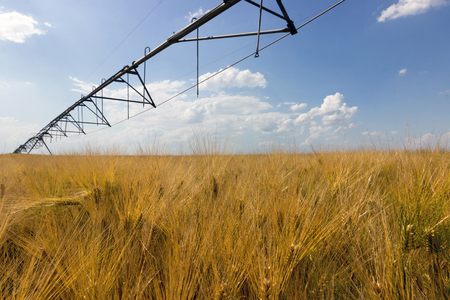 irrigation equipment: Wheat field and irrigation equipment