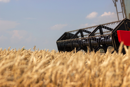 cosechadora: Combine harvester close up. Combine harvester harvesting wheat. Grain harvesting combine. Combine harvesting wheat. Wheat field blue sky. Close-up view of combine.