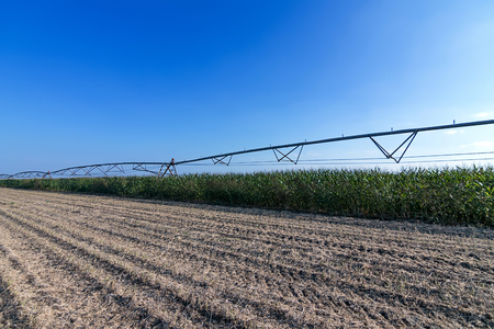 irrigation equipment: Corn field and irrigation equipment Stock Photo