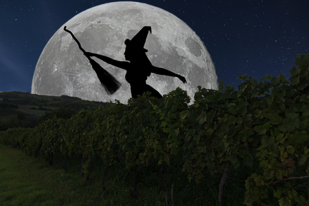 sabbath: Halloween witch silhouette flying with broomstick. Full Moon Vineyard. Stock Photo