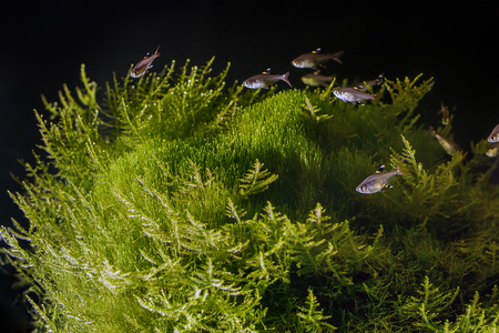 Underwater landscape. Planted tropical freshwater aquarium with fishes. Stock Photo