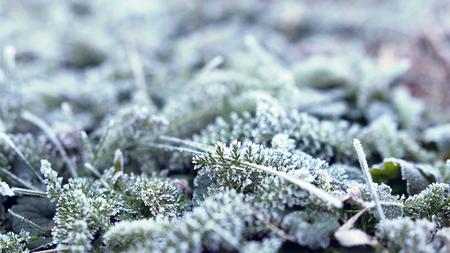 Hintergrund des Grases umfasst mit Reif. Frost am Morgen. Flache Schärfentiefe. Nahansicht.