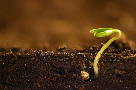 plant seed: Growing plant. Green sprout growing from seed.