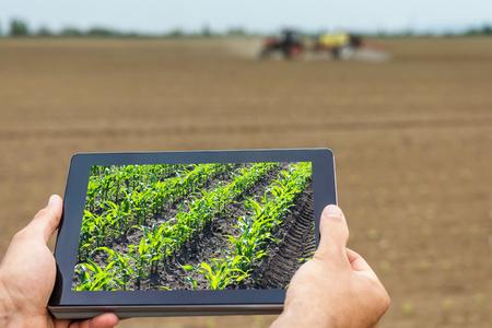 Slimme landbouw. Boer met behulp van tablet mais planten. Modern Landbouw concept. Stockfoto - 77300435