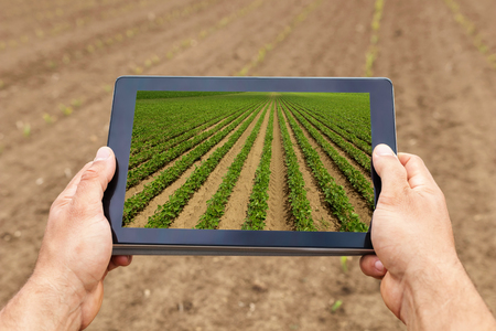 Smart agriculture. Farmer using tablet Soy planting. Modern Agriculture concept.