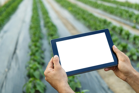 Farmer using tablet computer in greenhouse. White screen.