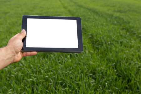 Farmer using tablet computer in green wheat field. White screen. Stok Fotoğraf
