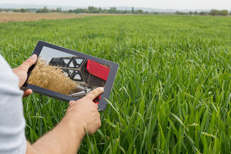 Using tablet on wheat field. Modern Agriculture. Wheat futures concept. Stock Photo