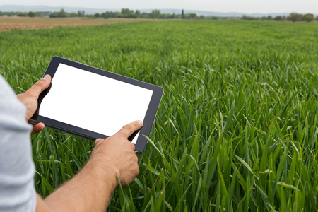 Farmer using tablet computer in green wheat field. White screen. Stockfoto