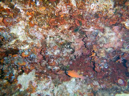 polyp corals: Under the sea. Reef Mediterranean. Stock Photo