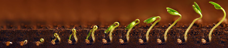 Seedlings growing. Plants grow stages. Seedlings growth periods. Banco de Imagens