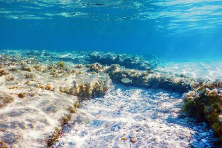 Onderwaterscène Zonlicht, vissen Onderwaterleven.