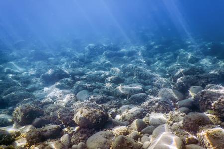 Sea Life Underwater rocks Sunlight, Underwater Life.