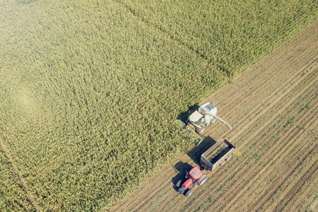 Agriculture cutting silage and filling trailer in field Aerial View Фото со стока