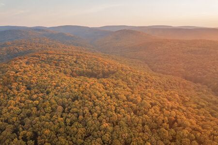 Autumn forest colorful trees and leafs aerial view Reklamní fotografie