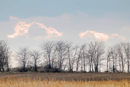 Rural landscape with leafless trees silhouetted against the big clouds