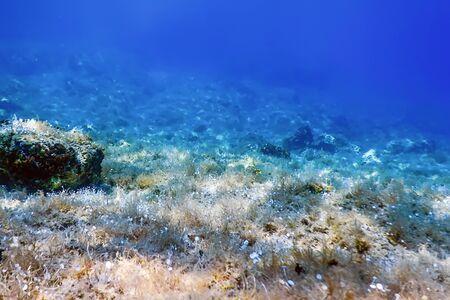 Sea Life Underwater View Sunlight, Underwater Life.
