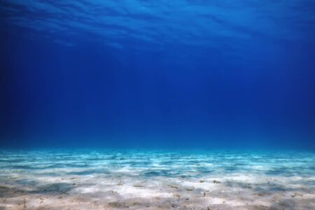 Underwater view of the sea surface.