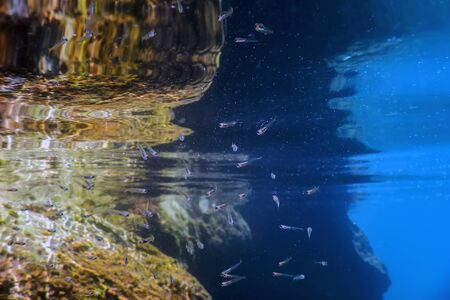 School of the baby fish Shallow Water, Underwater Banco de Imagens