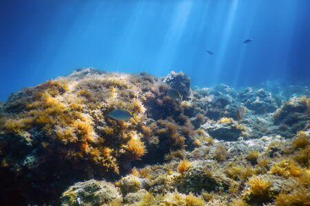 Underwater Scene Sunlight, fish Underwater Life.