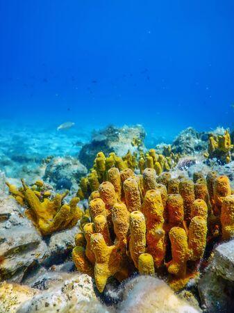 Yellow Sea Sponge, Bottom of Tropical Sea, Underwater