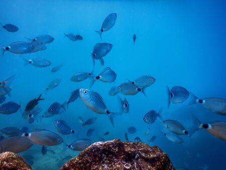 Fish School Underwater. Fishes underwater background. Stok Fotoğraf - 130031788