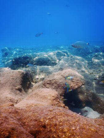 Sotto il mare, la luce del sole di scena subacquea, la vita sottomarina dei pesci.