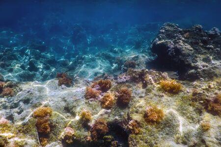 Sea Life Underwater Rocks Sunlight, Underwater Life