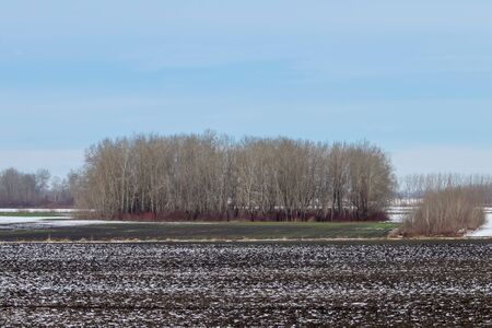 Early spring fields covered with snow, Melting snow on the plowed field