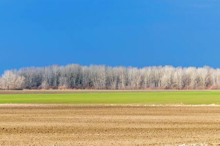 Early spring countryside landscape, Early spring wheat in a field Stockfoto