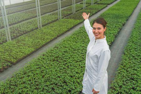 Seedlings production, Spring Seedlings. Successful young nursery owner. Greenhouse Seedlings Nursery. Imagens - 143138137