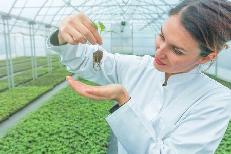 Woman holding plant in greenhouse nursery. Seedlings Greenhouse. Stockfoto