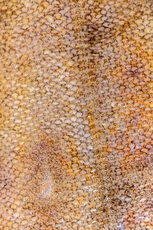 Arrière-plan de la nourriture, gros plan de texture d'écailles de poisson de plie