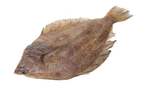 fresh raw fish flounder on white isolated background
