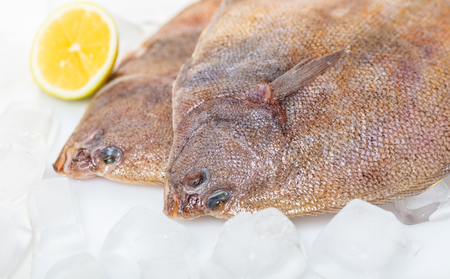 fresh raw flounder fish on ice background Banque d'images
