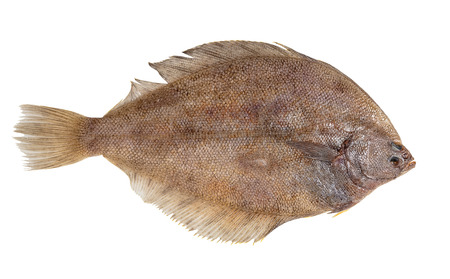 fresh raw fish flounder on white isolated background Stock Photo