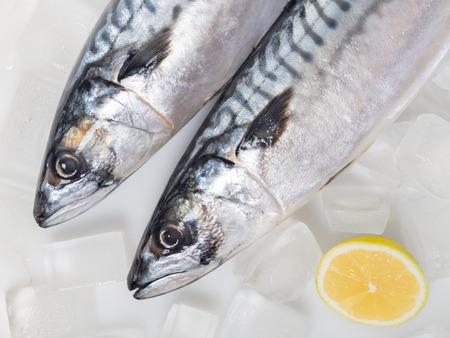 fresh raw mackerel fish on ice background