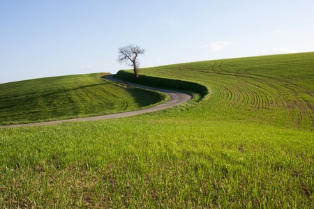 Hilly landscape of the Gers in spring ,(Gascony )