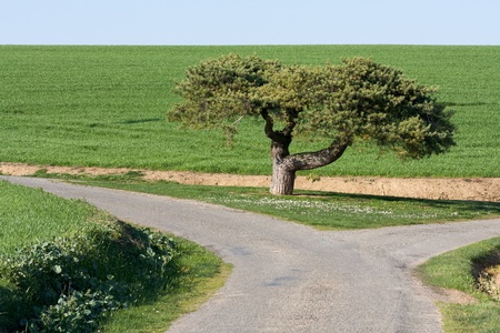 Tree in the middle of two roads (Gers, Gascony) Stock Photo