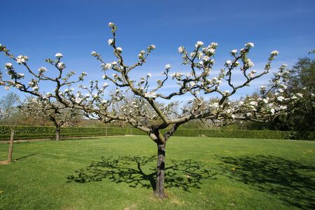 gascony: Tree blossoms in the garden, in spring, in Gascony (southern of France) Stock Photo