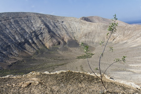 In the foreground a sapling  In the background, a wild volcanic landscape in Lanzarote, Spain  photo