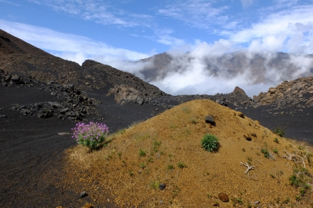 cape verde:  A few flowers on the volcanic and majestic land of Fogo , one of the ten islands of Cape Verde  Stock Photo