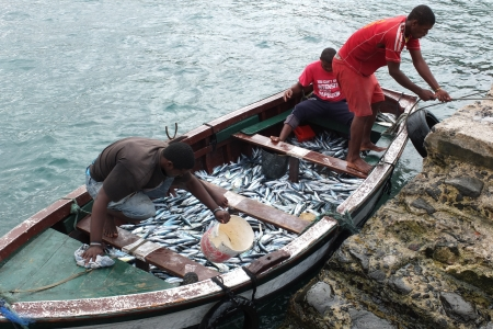 Tarrafal, Cape Verde - November 29, 2012: Some African fishermen are coming back to the village. Stock Photo - 16979322