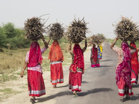 Women carrying faggots on the head, Rajasthan,India  They are wearing beautiful red saris