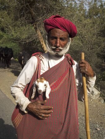 GHANERAO,  INDIA - MARCH 11: an unidentified old shepherd, wearing a red turban, is carrying a lamb during the summer transhumance, on March 11, 2013, in Ghanerao,India.