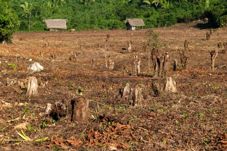 prohibitions: Destroyed tropical forest in Guatemala, Central America