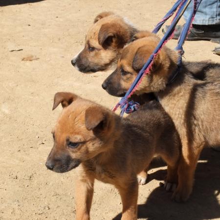 kept: Three sweet puppies kept on a leash