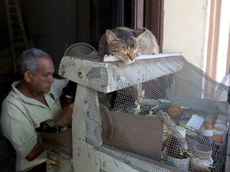 catechism: CAMAGUEY, CUBA - DECEMBER 3: a cute cat is sleeping on the stall of a street vendor, we december 3, 2014 in Camaguey, Cuba Editorial