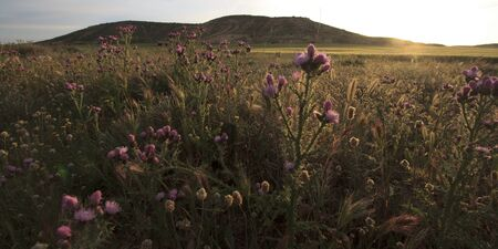 plateau of flowers: Sunrise with a backlight view of flowers in a field on a wild plateau in Spain Europe. Stock Photo