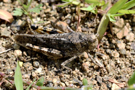 large marble grasshopper on the sand Stock fotó